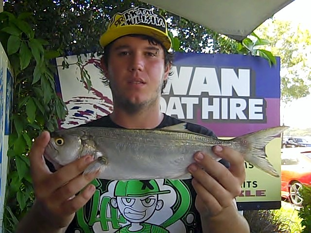 Josh_42cm_tailor_caught_on_pillies_at_the_Cod_Hole
